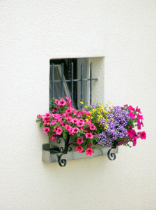 window-of-flowers-1-1528083
