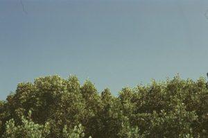 wycinka krzewów