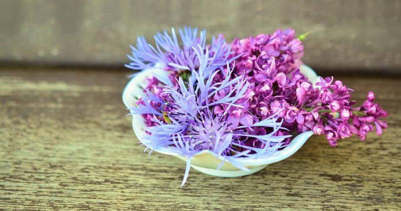 kwiaty do mieszkania